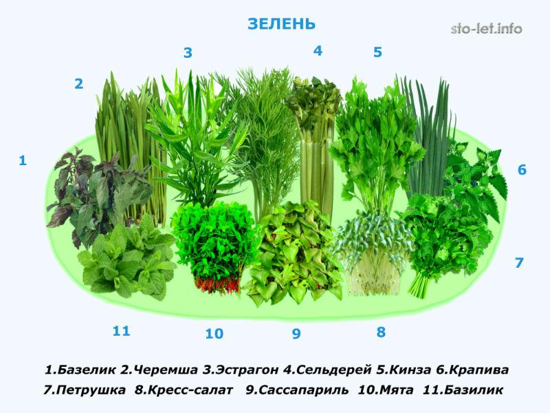 Зелень 800-600.jpg